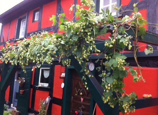FeWo Rotes Fachwerkhaus in Windeck-Langenbach