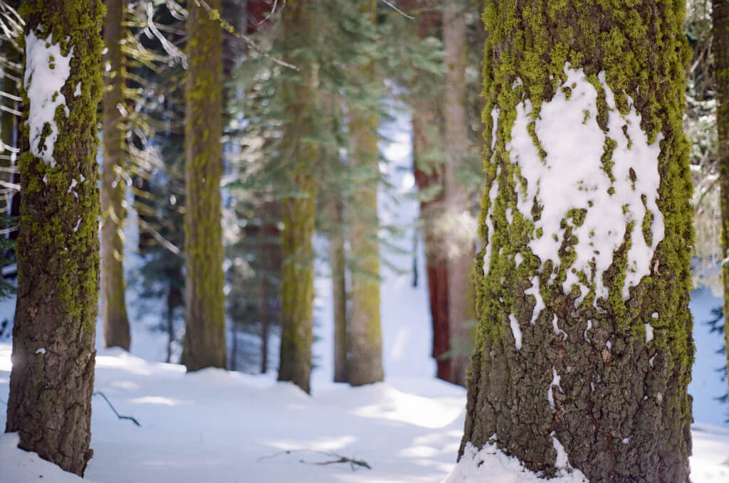 Waldbaden_Winter